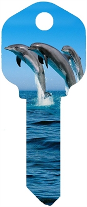 KW1 DOLPHINS