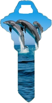 SC1 DOLPHINS